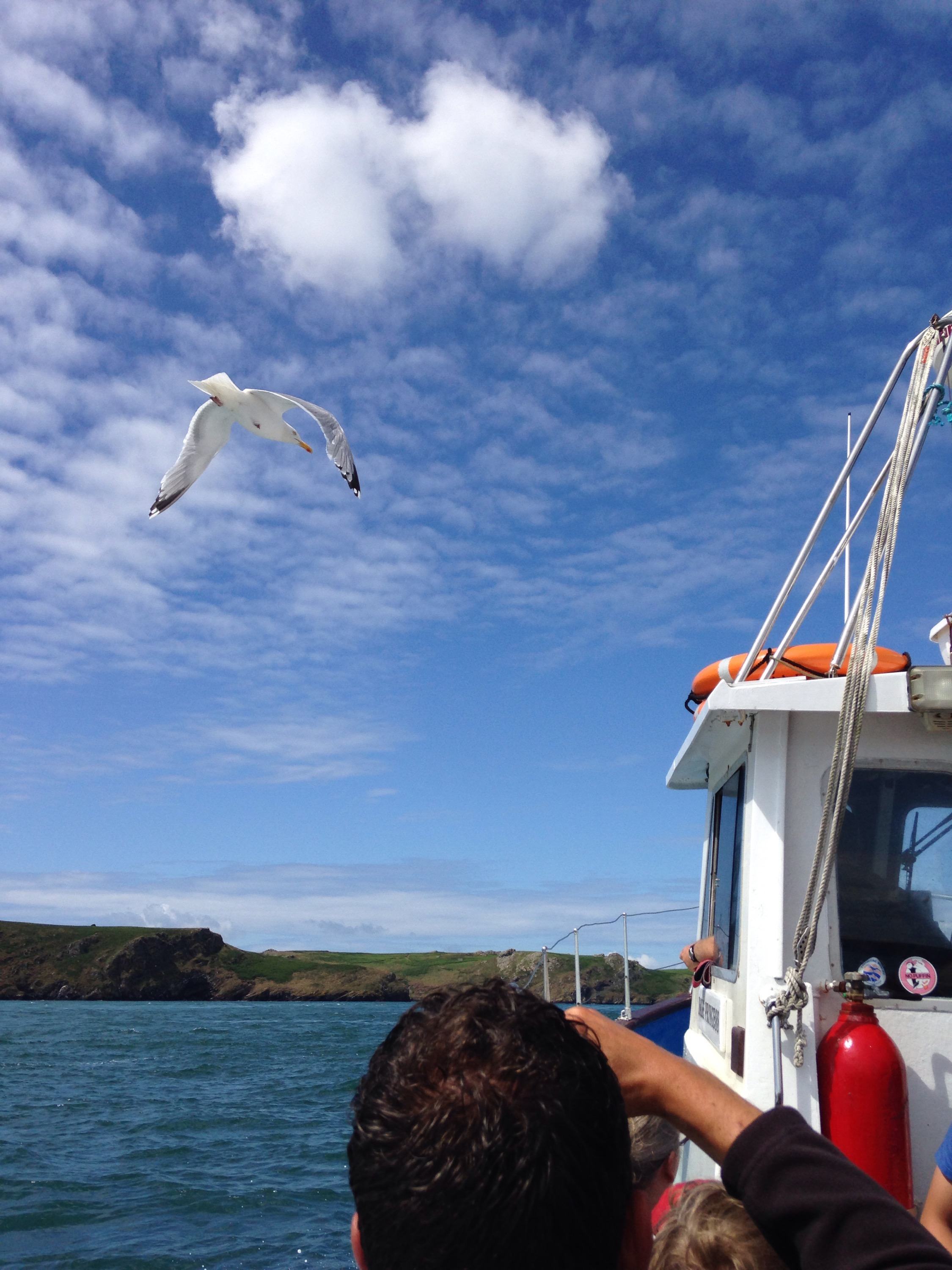Gull flying next to boat